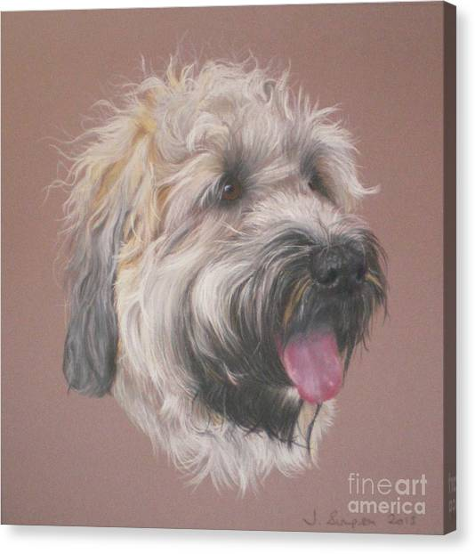 Dennis - Wheaten Terrier Canvas Print by Joanne Simpson
