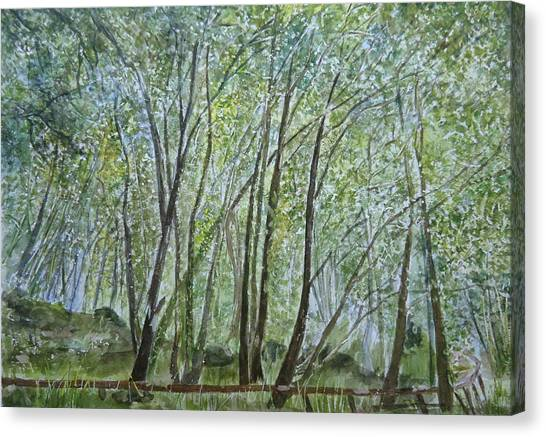 Dense Forest Canvas Print