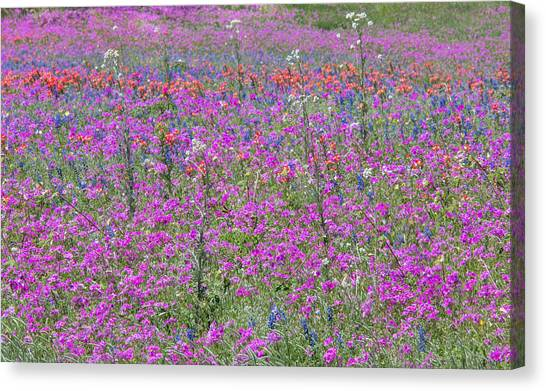 Dense Phlox And Other Wildflowers Canvas Print