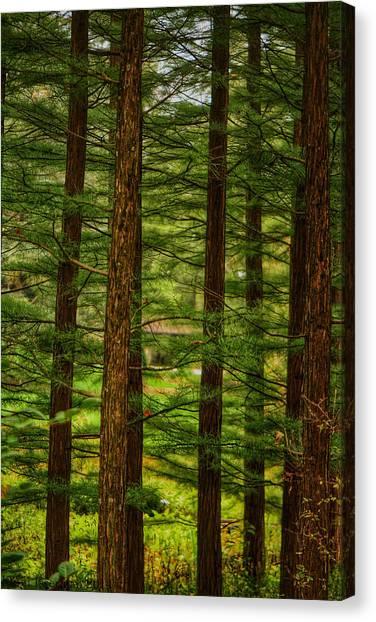 Density Canvas Print by Kathi Isserman