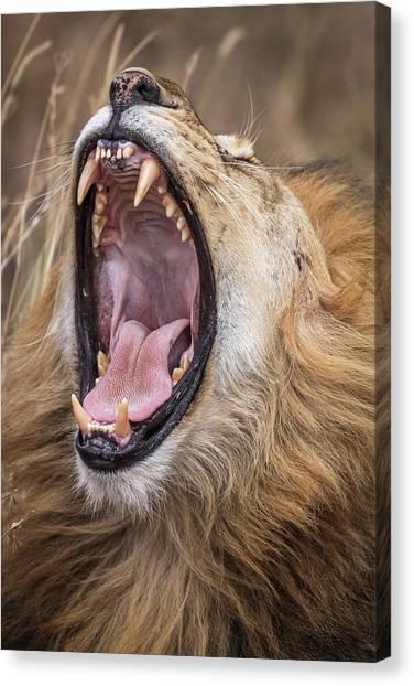 Tongue Canvas Print - Dental Check by Jeffrey C. Sink