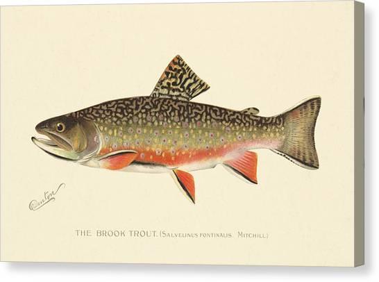 Denton Brook Trout Canvas Print