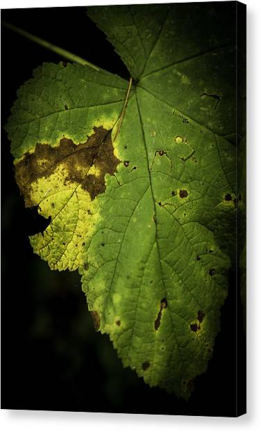 Depleted Canvas Print by Bryan Hildebrandt