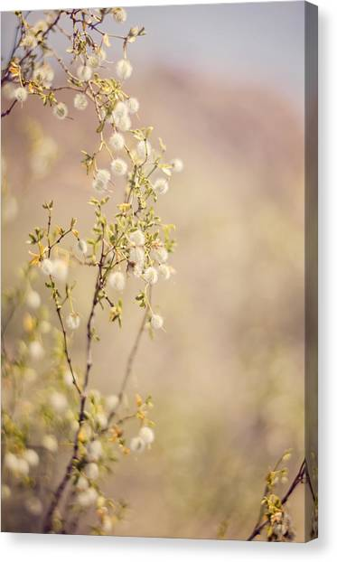 Desert Delicates Canvas Print