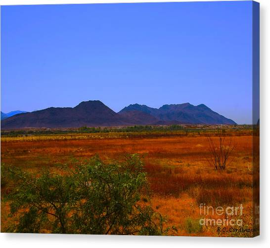 Desert Field Canvas Print by Rebecca Christine Cardenas