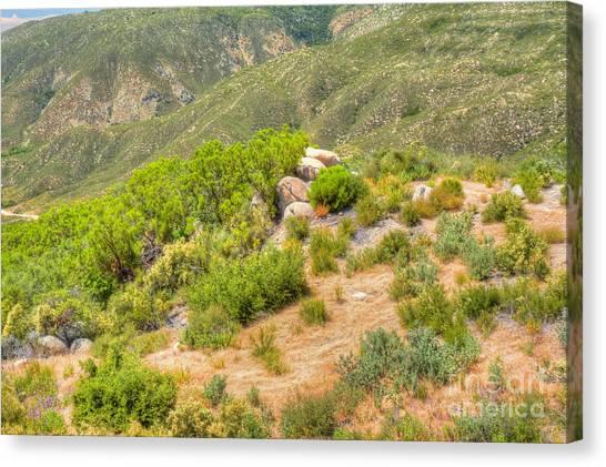 Desert Greenery Canvas Print by Deborah Smolinske