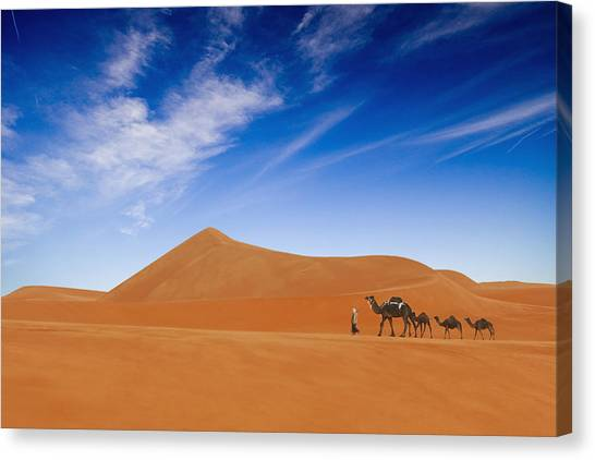 Camels Canvas Print - Desert Life .. by Hesham Alhumaid