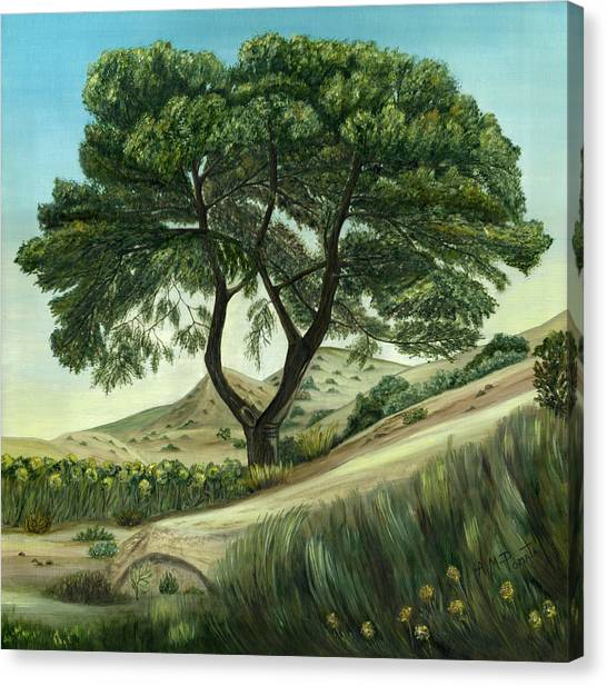 Desert Pine Canvas Print
