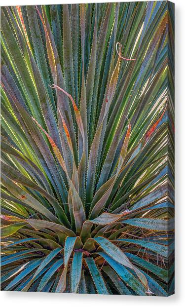 Desert Spoon Canvas Print