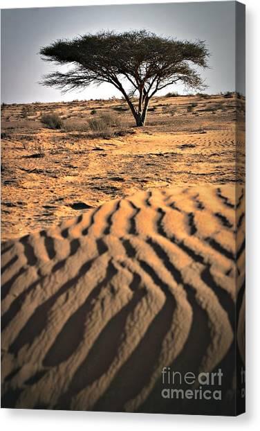 Negev Desert Canvas Print - Desert Survivor by Henry Kowalski