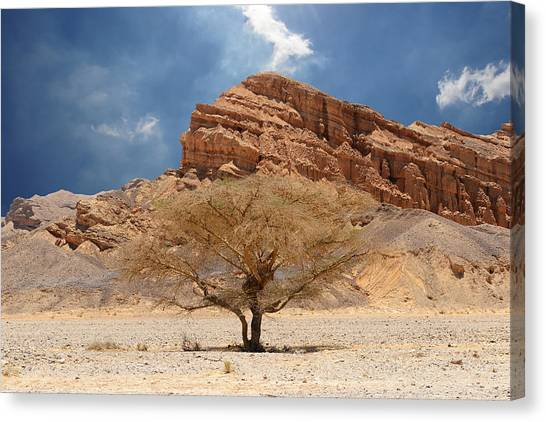 Desert Tree And Mountains Canvas Print