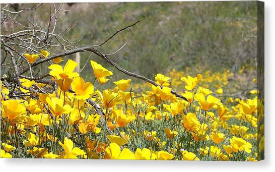 Desert Wild Flowers Canvas Print