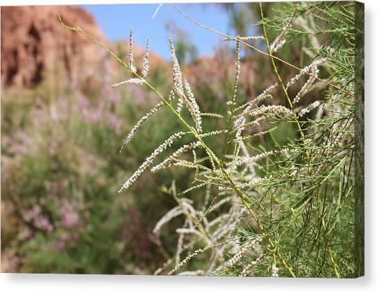 Canvas Print - Desert Wildflowers by Christine Rivers