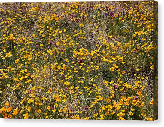 Desert Wildflowers Canvas Print by Robert Ashbaugh