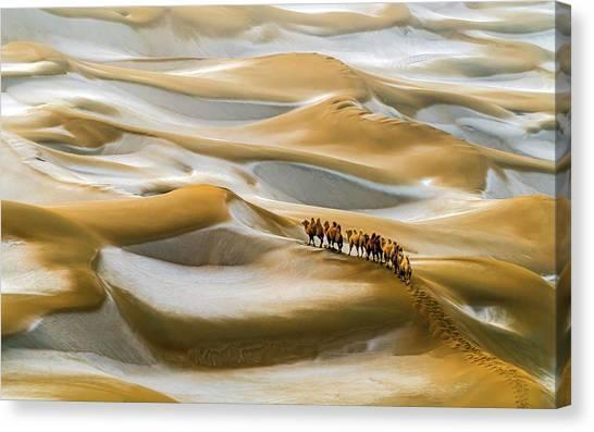 Camels Canvas Print - Desert Winter by Hua Zhu