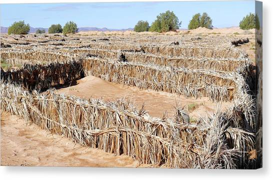 Sahara Desert Canvas Print - Desertification Prevention by Thierry Berrod, Mona Lisa Production
