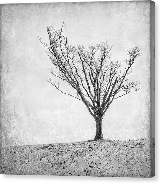 Sandy Canvas Print - Desperate Reach by Scott Norris