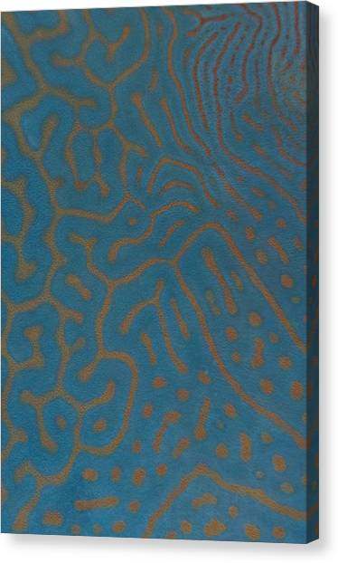 Parrot Fish Canvas Print - Detail Of Napoleon Wrasse Skin by Science Photo Library