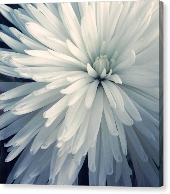 Detail Shot Of Cropped White Flower Canvas Print by Valerie Locante / Eyeem