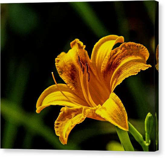 Detailed Lily Canvas Print by Dave Bosse