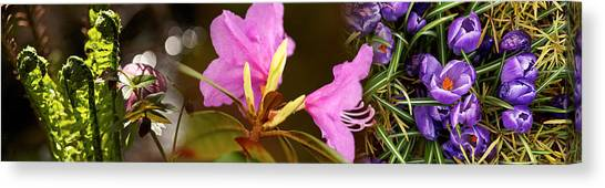 Early Spring Canvas Print - Details Of Early Spring Flowers by Panoramic Images