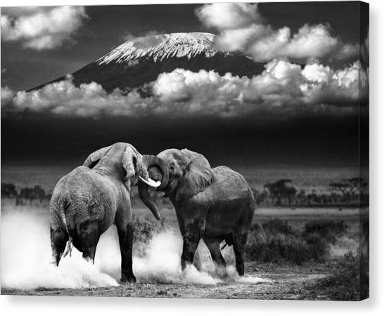 Kenyan Canvas Print - Determined To Dominate by Mike Gaudaur