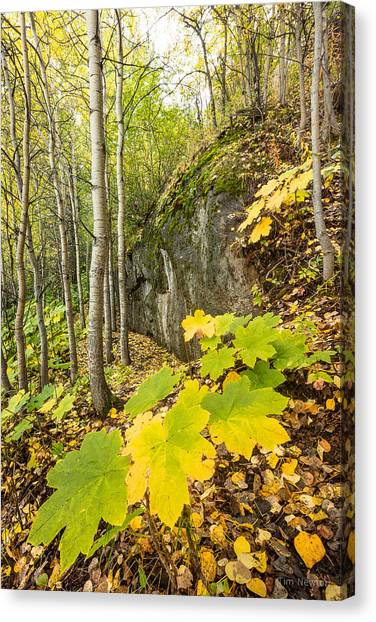 Devil's Club In Autumn Canvas Print