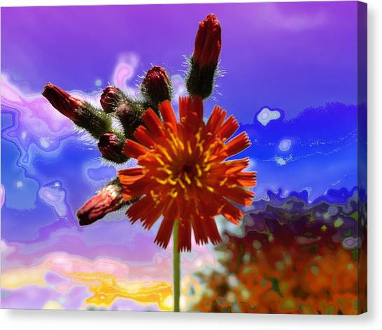 Devil's Paintbrush Canvas Print