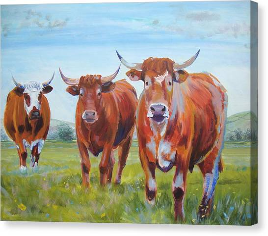 Devon Cattle Canvas Print
