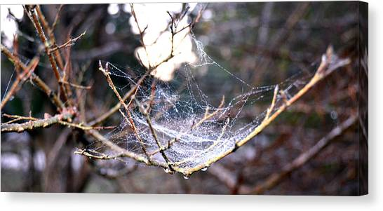 Dew Covered Spiderweb Canvas Print by Julie Cameron