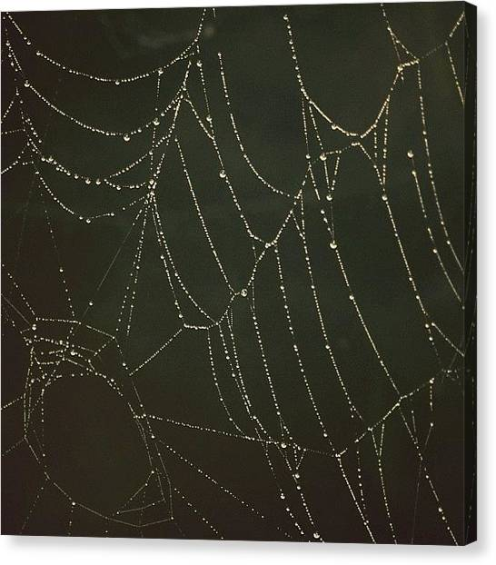 Spider Web Canvas Print - dew by Nao Kato