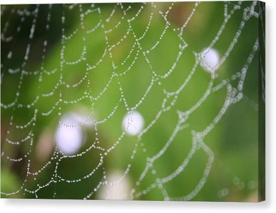 Dew On A Web  Canvas Print