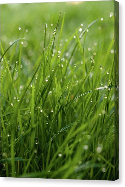 Blade Of Grass Canvas Print - Dew Respect by James Galpin