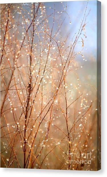 Carol Groenen Canvas Print - Dewdrop Morning by Carol Groenen