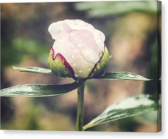 Dewy Bloom Canvas Print