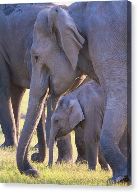 Dhikala Elephants Canvas Print