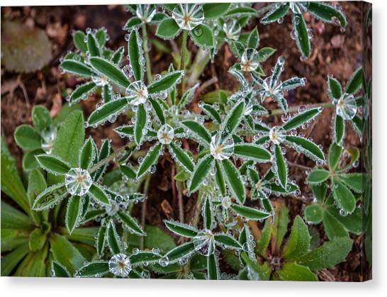 Diamond Flowers Canvas Print by Kelly Kitchens