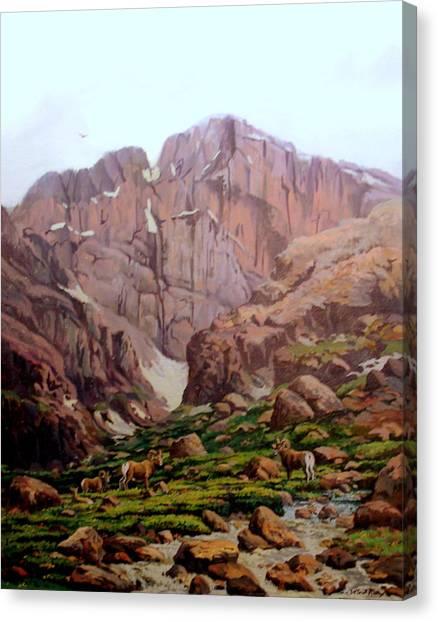 Diamond Sheep Canvas Print by W  Scott Fenton