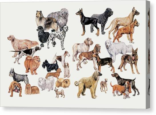 Different Breeds Of Dogs Canvas Print by Deagostini/uig/science Photo Library