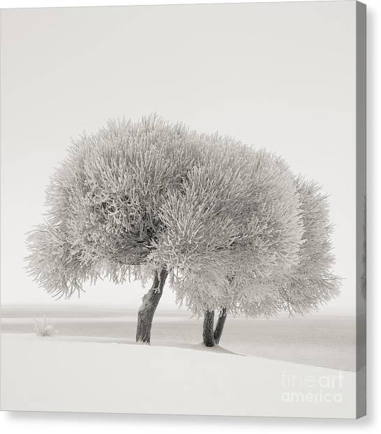 Different Season Canvas Print