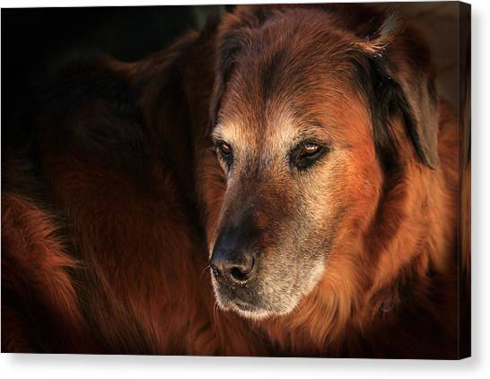 Dignified Canvas Print