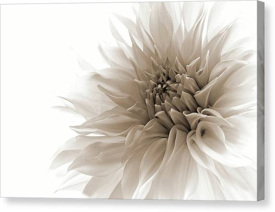 Nature Still Life Canvas Print - Dignified by Priska Wettstein