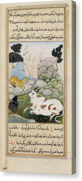 Fabled Canvas Print - Dimna With The Ox by British Library
