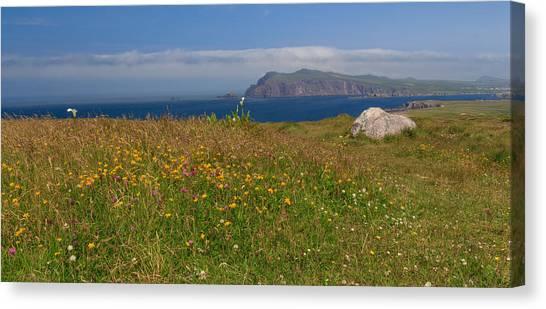 Dingle Wildflowers Canvas Print