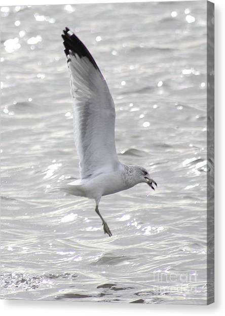 Dining Seagull Canvas Print