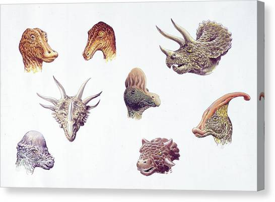 Triceratops Canvas Print - Dinosaur Heads Compared by Deagostini/uig