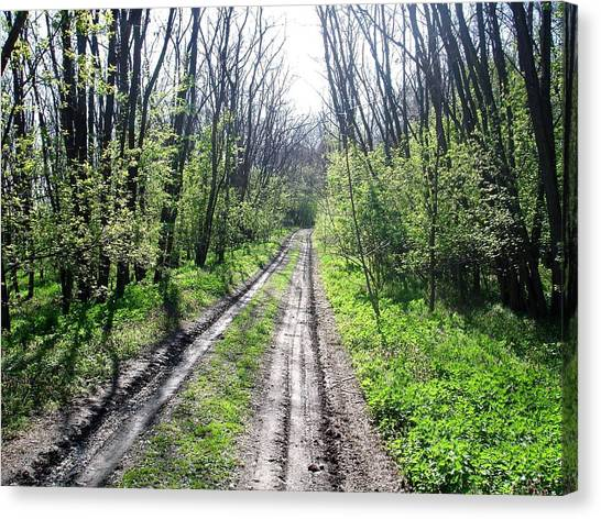 Dirt Road Canvas Print - Dirt Road In The Woods by Paula Bader