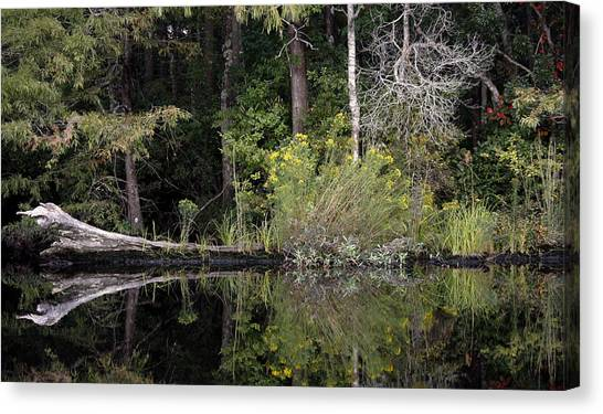 Great Dismal Canvas Print - Fallen Beauty by Debby Zimmerman