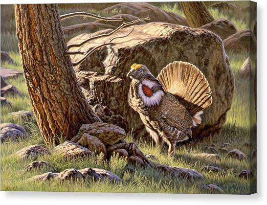 Yellowstone Canvas Print - Displaying--blue Grouse by Paul Krapf