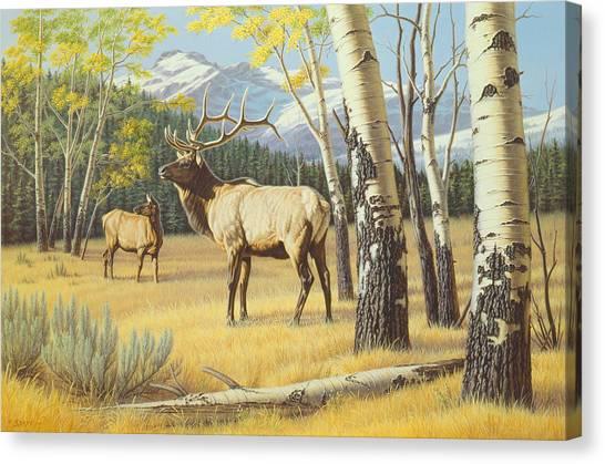 Elk Canvas Print - Distant Bugle by Paul Krapf